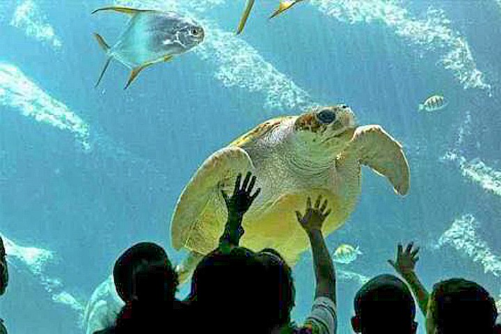 Hurghada Grand Aquarium |Grand Aquarium Hurghada Ticket