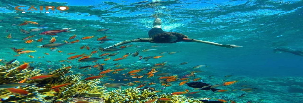 Snorkling trip in Hurgada from Safaga Port | Safaga shore excursions