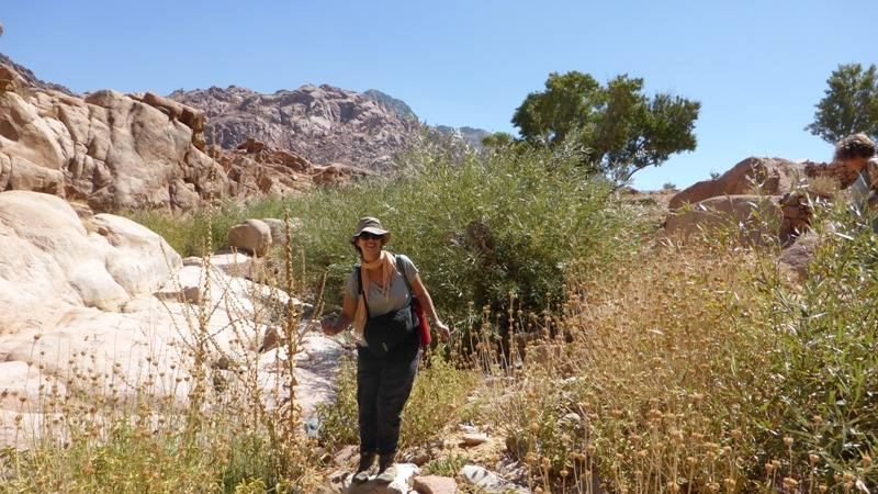 Wadi Shagg Meditation and Yoga Tour in Sinai