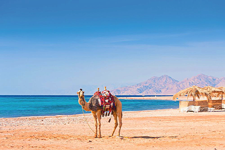 Marsa Alam Activities | Marsa Alam Resorts