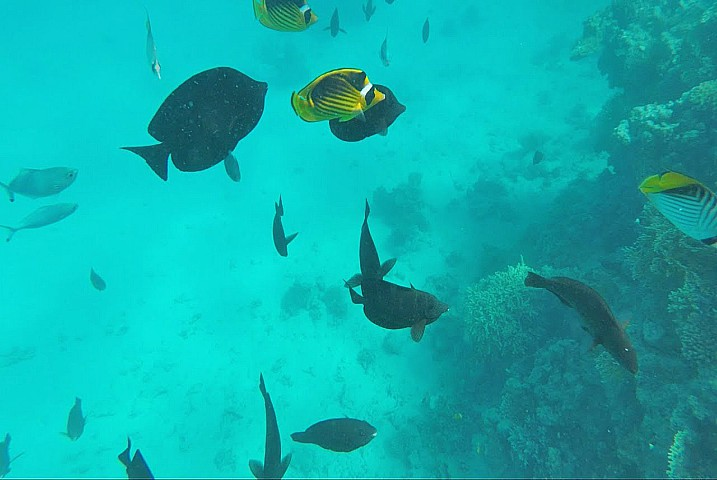 Orange Bay Snorkeling Trip from Hurghada