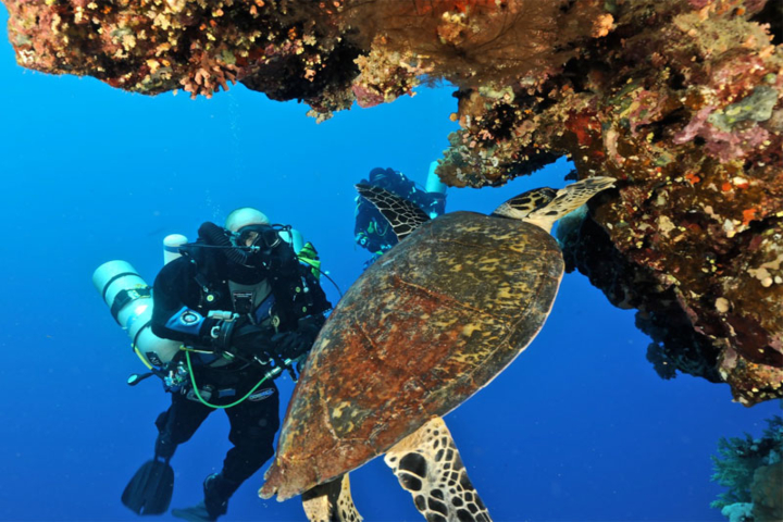 8 Days Cairo and Sharm El Sheikh Holiday Package.