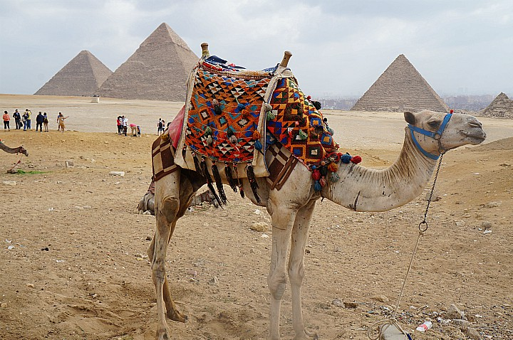 12 Days Pyramids, Nile Cruise, and Sharm El Sheikh Christmas Tours