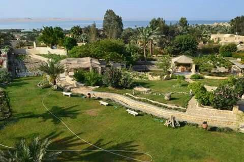 Meditation and Yoga Tour in Fayoum Oasis from Cairo